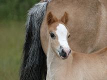 Pretty Foal Stock Images