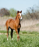 A pretty foal Stock Images