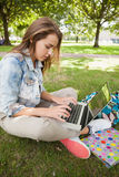 Pretty focused student sitting on grass using laptop Royalty Free Stock Photography