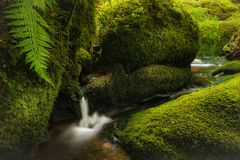 A pretty forest scene with a small waterfall and stream surrounded by lush green moss and ferns. royalty free stock photos