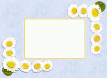 Daisy spring or springtime border Royalty Free Stock Photo