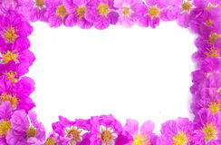 Pretty frame from purple flowers Stock Photos