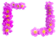 Pretty frame from purple flowers Royalty Free Stock Image