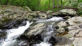 Pretty Friend's Creek Waterfalls stock video