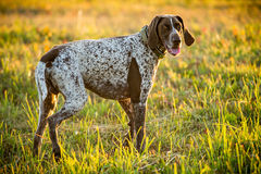 Pretty friendly dog look Royalty Free Stock Photography