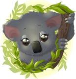 Pretty funny koala Stock Image