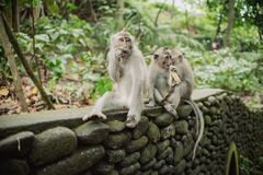 Pretty funny monkey Royalty Free Stock Images