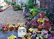 Pretty garden. Area with lots of heuchera plants stock images