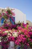 Pretty Garden, Santorini, Greece. Pretty Greek Front Garden, Santorini, Greece Royalty Free Stock Photos