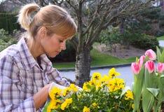 Pretty gardener royalty free stock photography