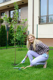 Pretty gardener woman planting apple tree stock photography