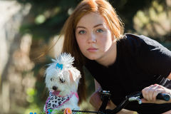 Pretty girl with bicycle and Maltese dog Royalty Free Stock Photo