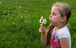 Pretty girl blowing dandelion Stock Photos