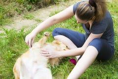 Pretty girl combing dog outdoor Stock Photos