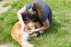 Pretty girl combing dog outdoor Stock Images