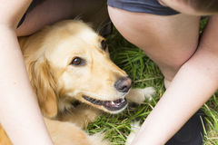 Pretty girl combing fur of dog outdoor Stock Photography