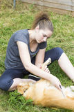 Pretty girl combing fur of dog outdoor Royalty Free Stock Image