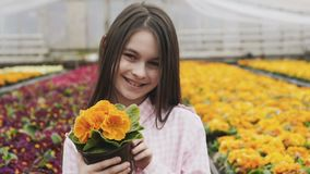 Pretty girl with flowerpot in hands looks at camera in greenhouse stock video footage