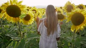 Pretty girl in a hat runs away in a field of sunflowers and laughs. Young beautiful woman flirts and has fun in the. Field. Portrait view stock video footage