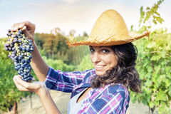 Pretty girl picks grapes in a vineyard Stock Photography