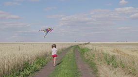 Pretty girl playing with kite in wheat field on summer day. Childhood, lifestyle concept. Pretty girl playing with kite in wheat field on summer day. Childhood stock footage
