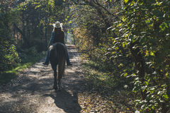 Pretty girl riding her grey horse Royalty Free Stock Image