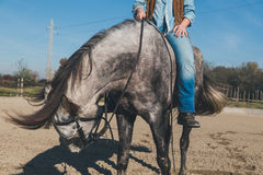 Pretty girl riding her grey horse Stock Image