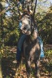 Pretty girl riding her grey horse Stock Photos