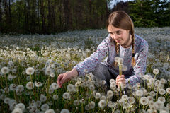 Pretty Girl Sitting on Dandelions Field on Sunny Spring Day Royalty Free Stock Image