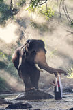 Pretty girl in traditional thai costumes touching elephant& x27;s trunk Stock Image