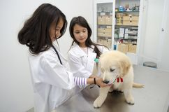 Pretty girls Pretending to be veterinarians. Two pretty little girls pretending to be veterinarians treating a puppy golden retriever Royalty Free Stock Image