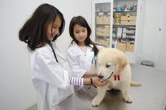 Pretty girls Pretending to be veterinarians. Royalty Free Stock Image