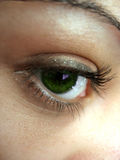 Pretty Green Eye Royalty Free Stock Image