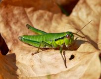 Pretty green insect Stock Images