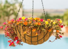Pretty hanging flower basket. Stock Images