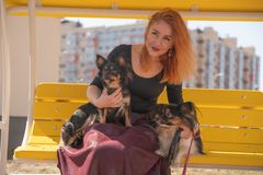 Pretty happy redheaded woman with two little dogs on the yellow summer bench. Isolated stock photos