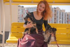Pretty happy redheaded woman with two little dogs on the yellow summer bench. Isolated royalty free stock image