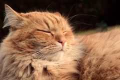 Pretty happy and sleepy cat Stock Photo