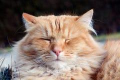 Pretty happy and sleepy cat Royalty Free Stock Photos