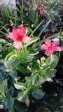 Pretty Hawaiian floral royalty free stock image