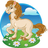 Pretty horse on a color background Stock Image