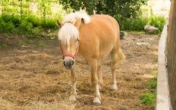 Pretty Horse Royalty Free Stock Photo