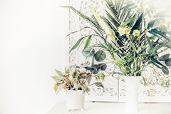 Pretty indoor plants on white table, home interior. Concept Stock Images