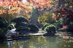 Pretty Japanese garden design in autumn Stock Images