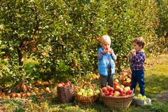 Free Pretty Kids Eat Fruits At Fall Harvest Royalty Free Stock Photo - 134182155