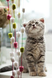 Pretty kitten Royalty Free Stock Images