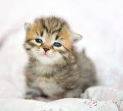 Pretty kitten Stock Image