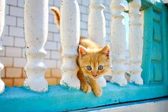 Pretty kitten. Pretty little kitten with blue eyes is on the fence Stock Images
