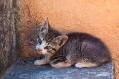 Pretty kitten. Little kitten near old wall is looking with sad eyes Royalty Free Stock Photo