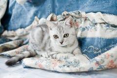 Pretty kitten Stock Photography